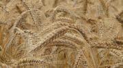 Где найти тендеры на зерно